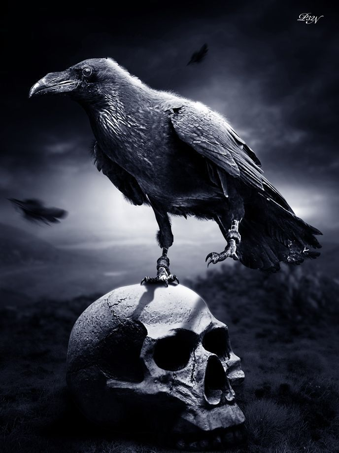 Evil crow wallpaper - photo#43